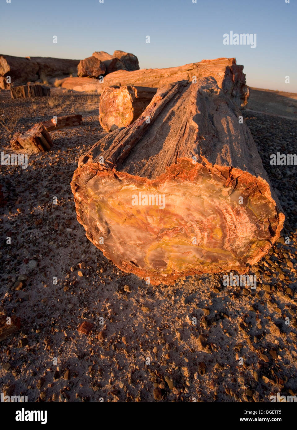 Whole and broken petrified logs at Petrified Forest National Park in Arizona, USA. - Stock Image