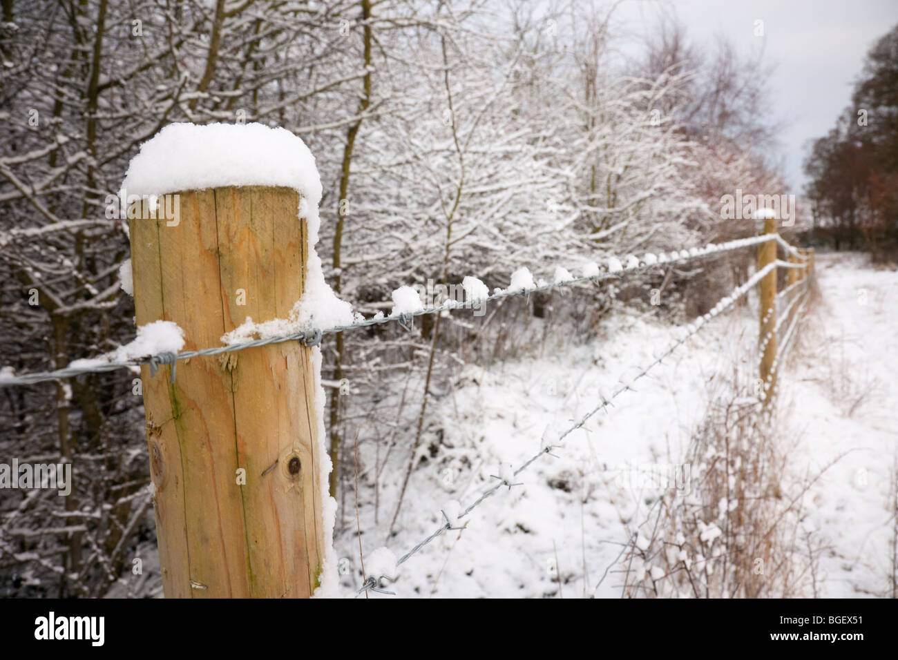 Barbed wire fence around a field with snow in winter. England, UK, Britain - Stock Image