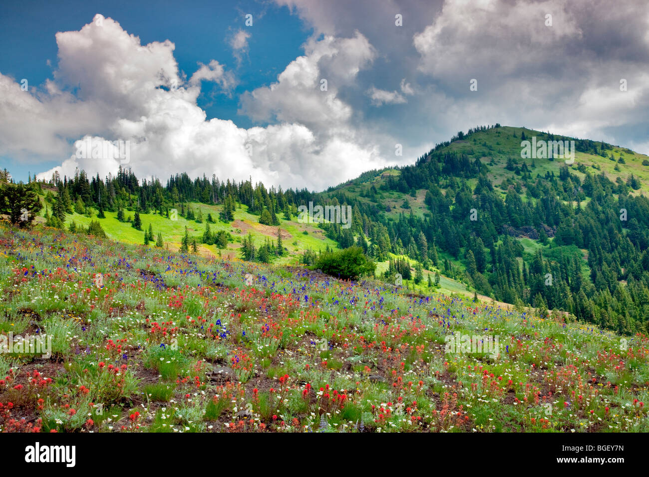 Echo Mountain with wildflowers and clouds. Linn County, Oregon. - Stock Image