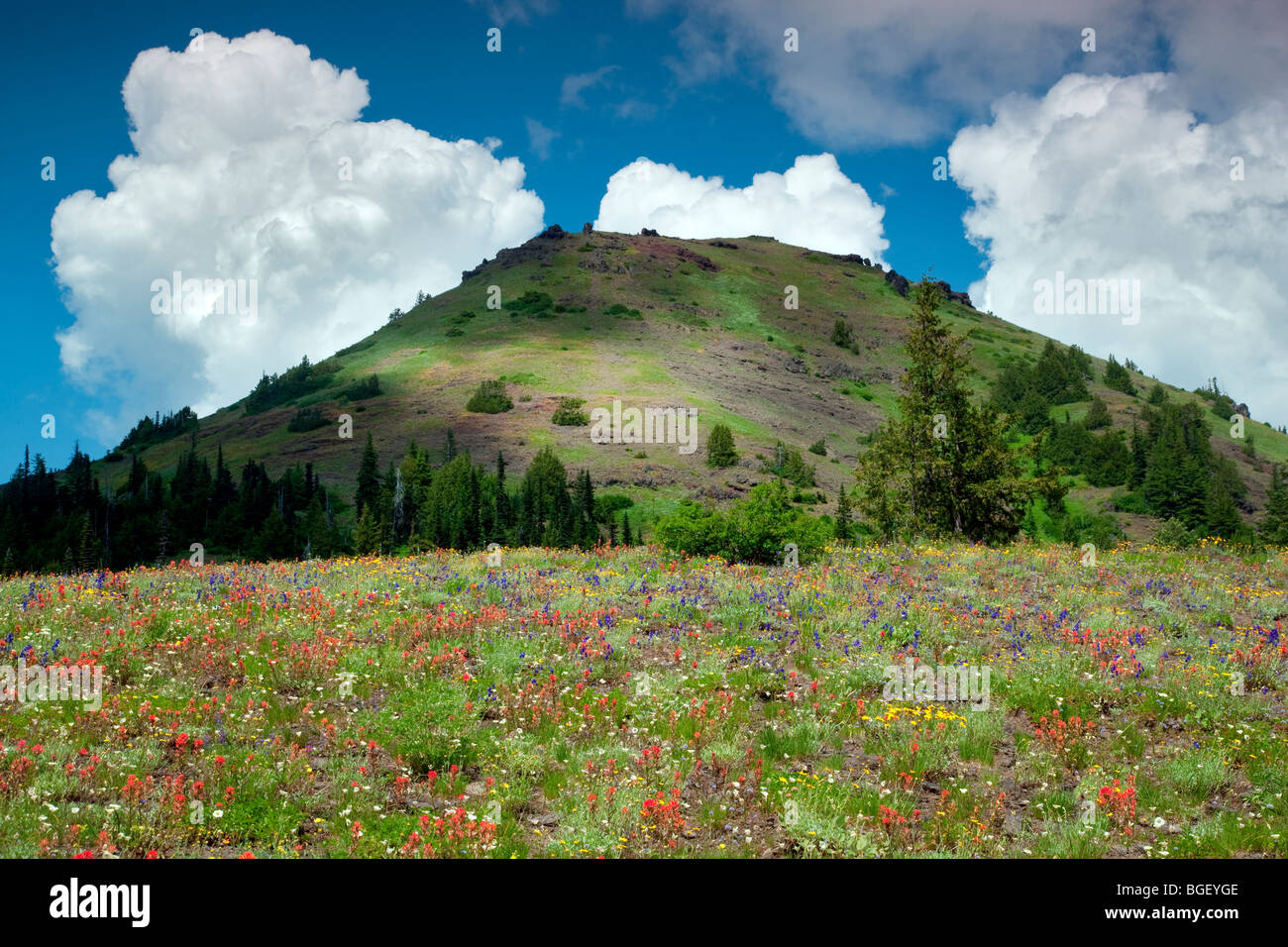 Cone peak with wildflowers and clouds. Linn County, Oregon - Stock Image