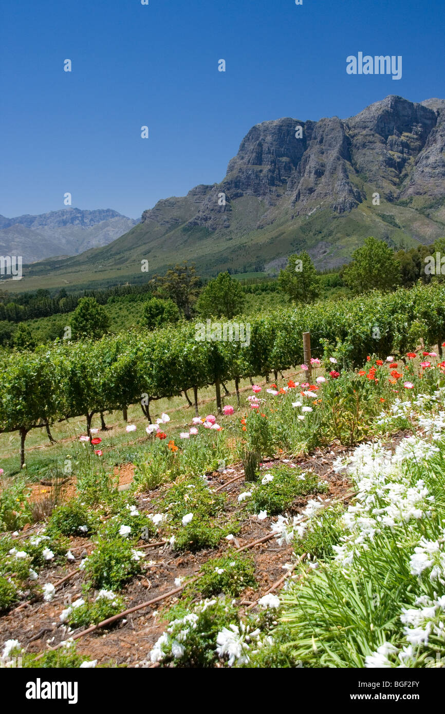 Delaire Graff Estate Helshoogte Mountain Pass, Stellenbosch - Stock Image