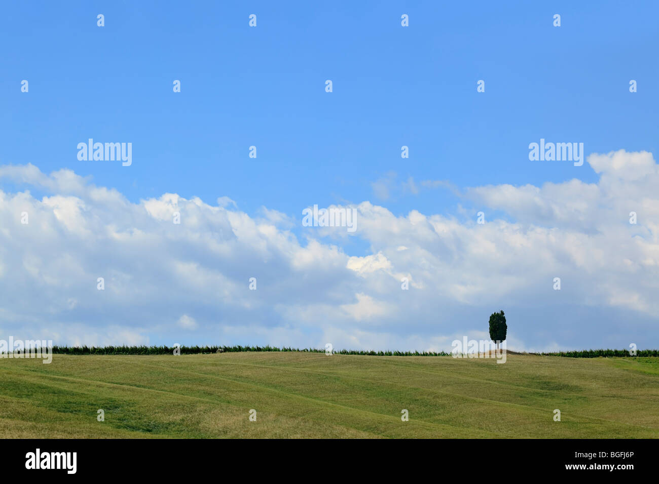 Lone tree in a field - Stock Image