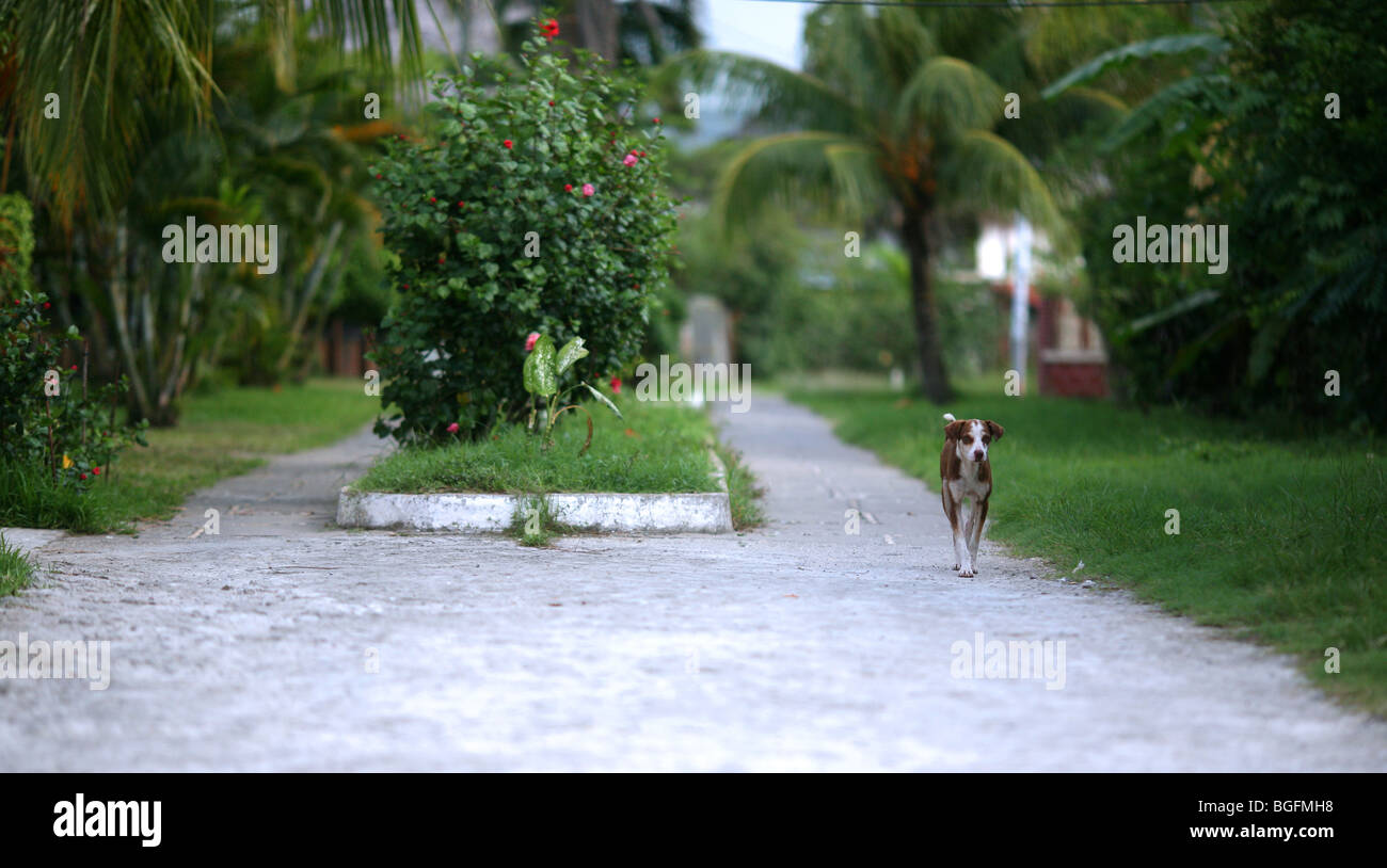 A dog walks along one of the small town's scenic streets. Livingston, Izabal, Guatemala, Central America - Stock Image