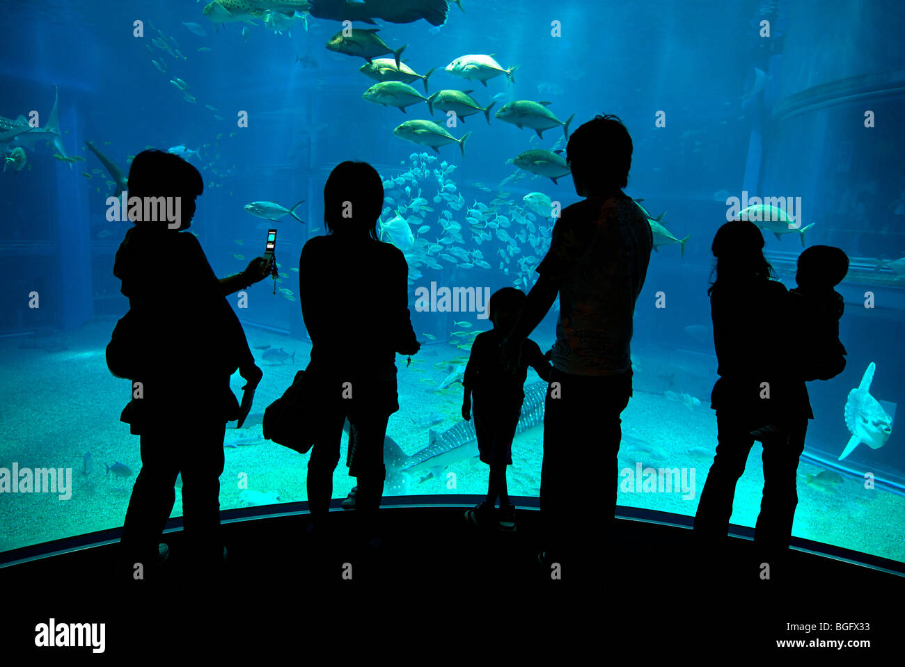 Osaka aquarium, Osaka, JapanStock Photo