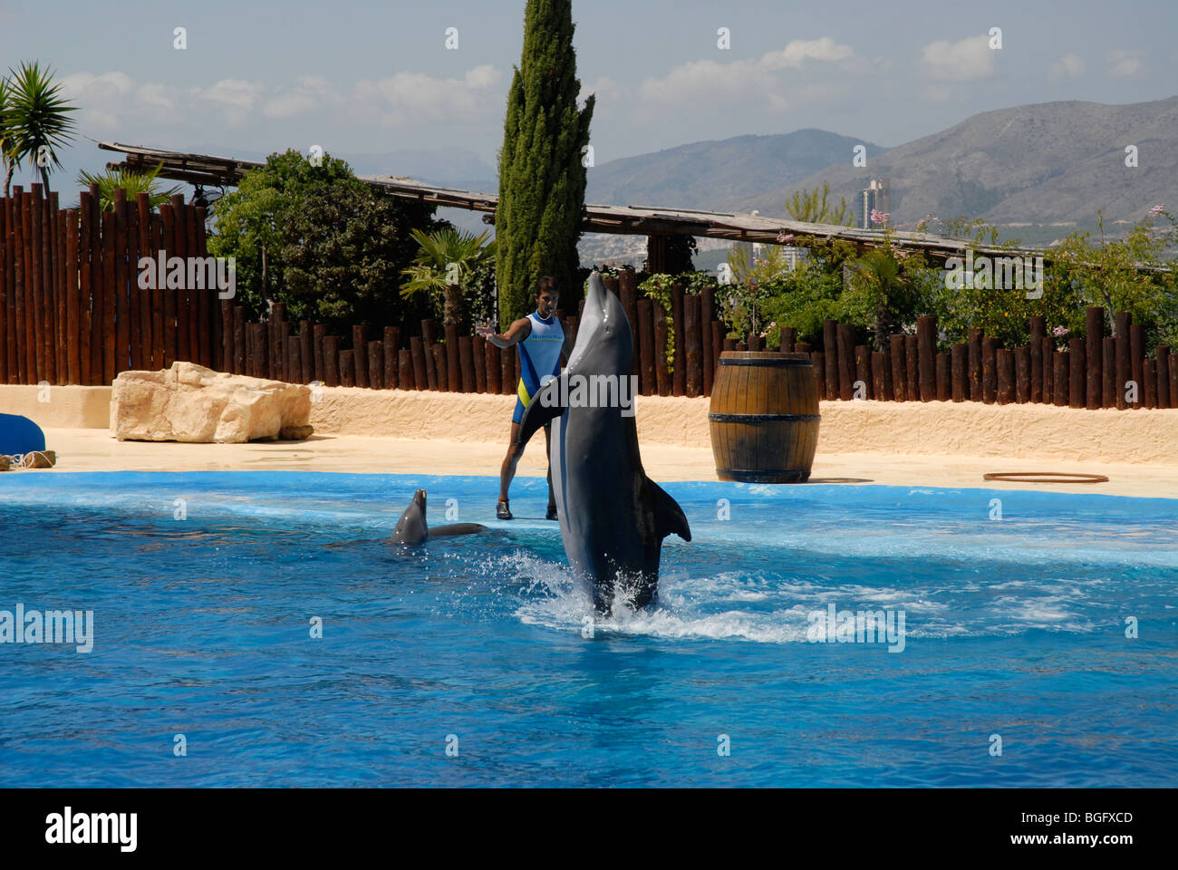 performing dolphin and trainer, Dolphin Show, Mundomar, Benidorm, Alicante Province, Comunidad Valenciana, Spain Stock Photo