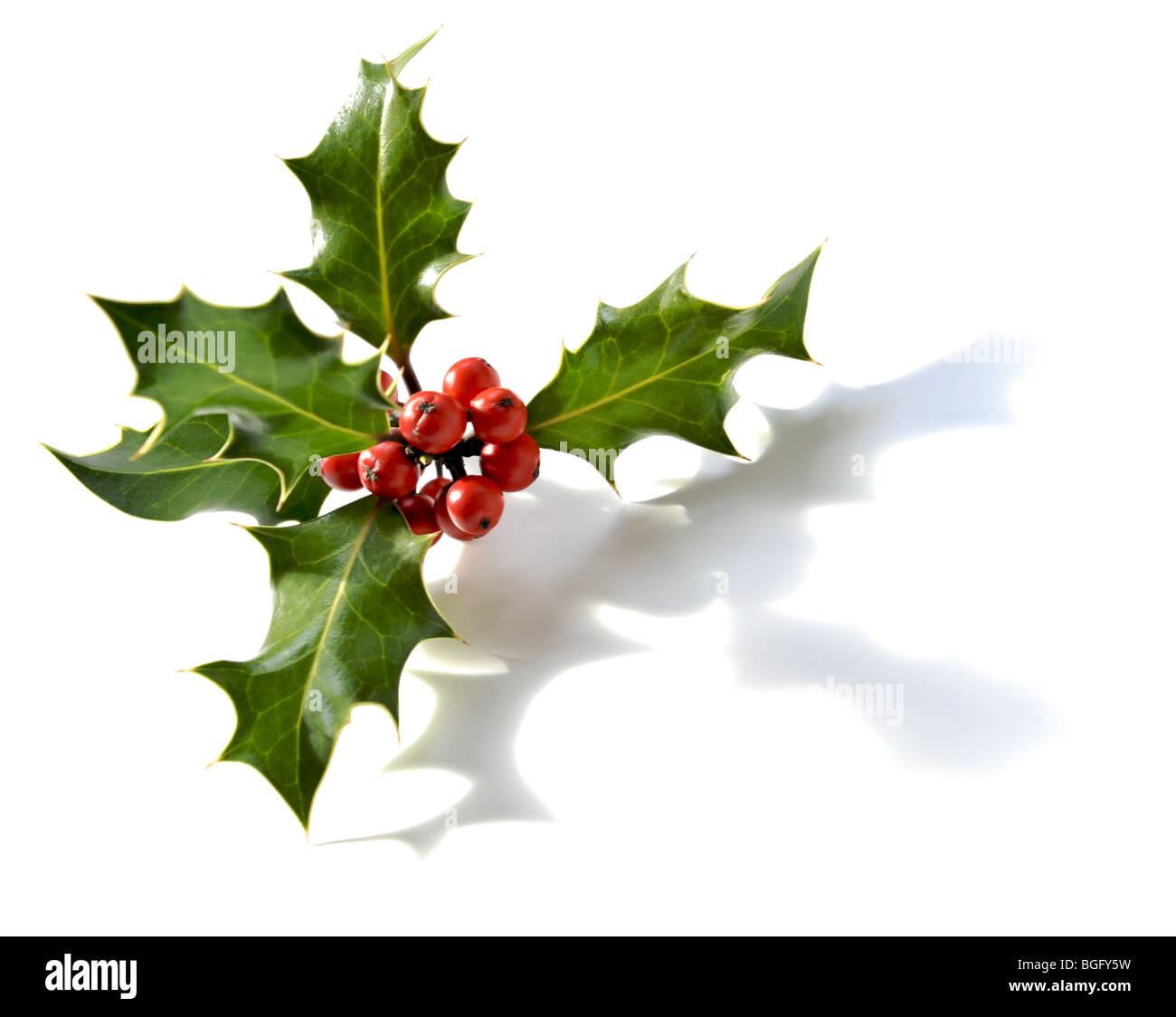 Holly sprig with red berries on white - Stock Image