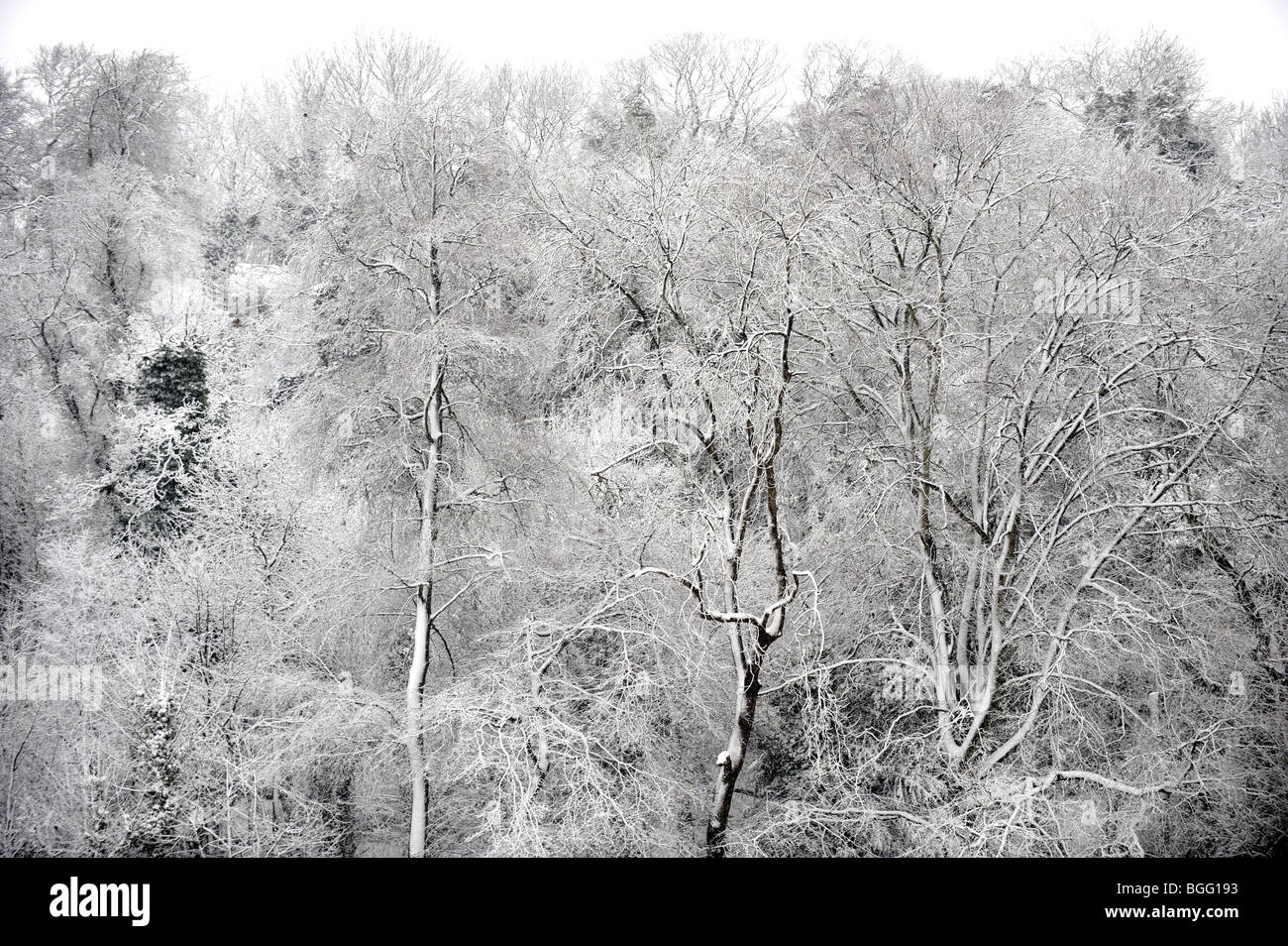 Floodlights at Withdean Stadium blend in with snow laden trees in Brighton Sussex UK Stock Photo