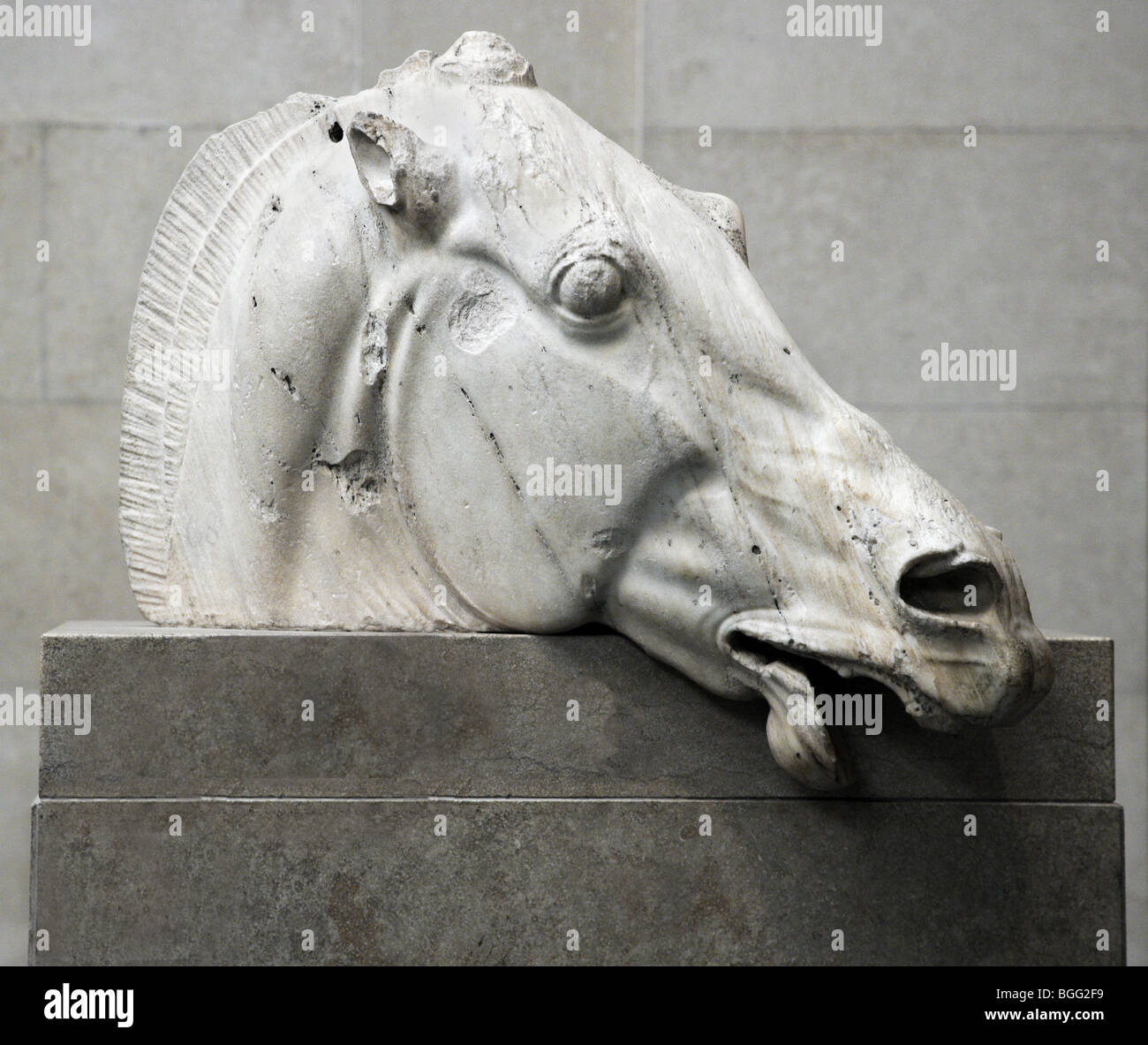 Parthenon Selene or Nyx Horse from the east pediment of the Parthenon in Athens now in the British Museum as the - Stock Image