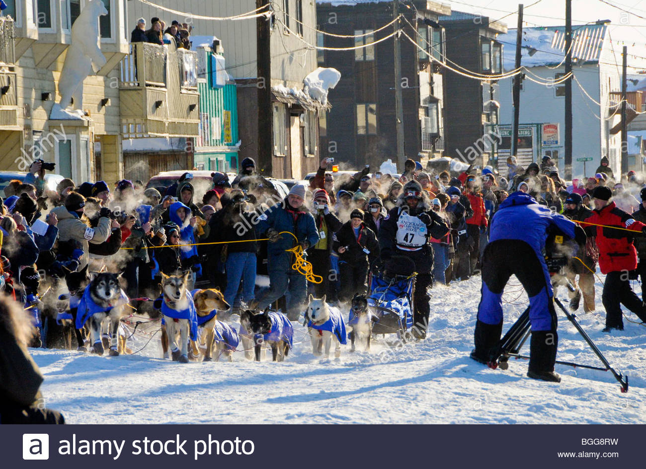 Lance Mackey arrives down Front St. amidst crowds and cheers in Nome, Alaska to win Iditarod 37, March 18, 2009, - Stock Image