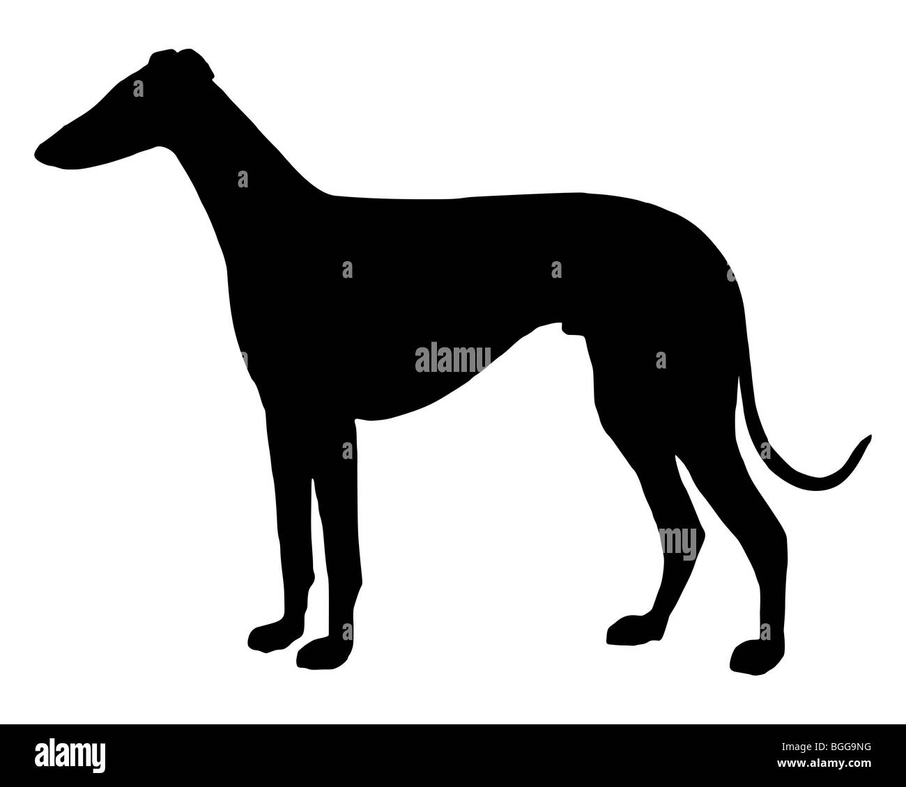 The black silhouette of a shorthaired Sighthound Stock Photo