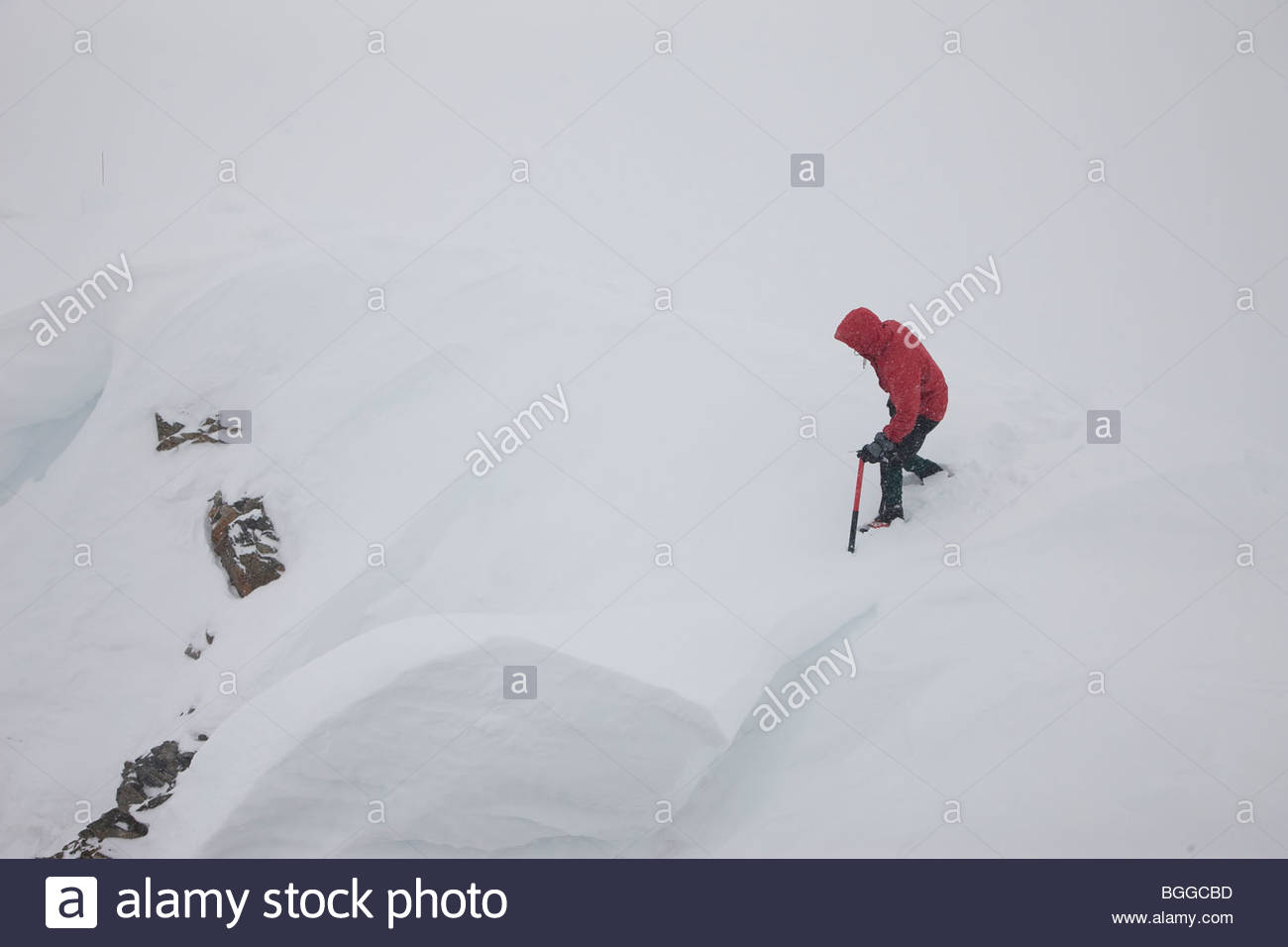 A mountaineer tests a cornice with his ice axe while glacier traveling in a snow storm in the Alaska Range, Denali - Stock Image