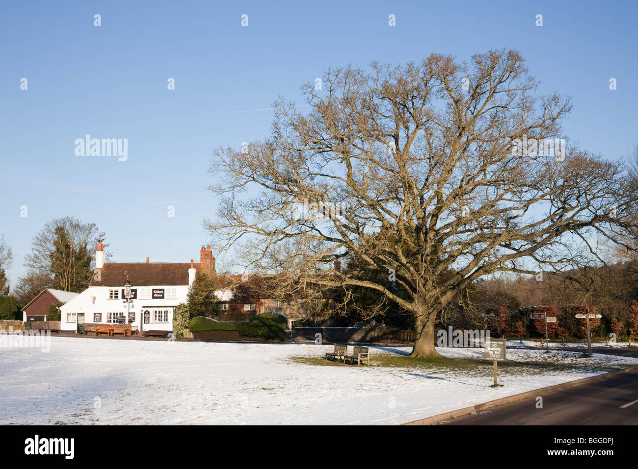Tilford, Surrey, England, UK, Britain. Village pub and Oak tree with snow on the green in winter - Stock Image