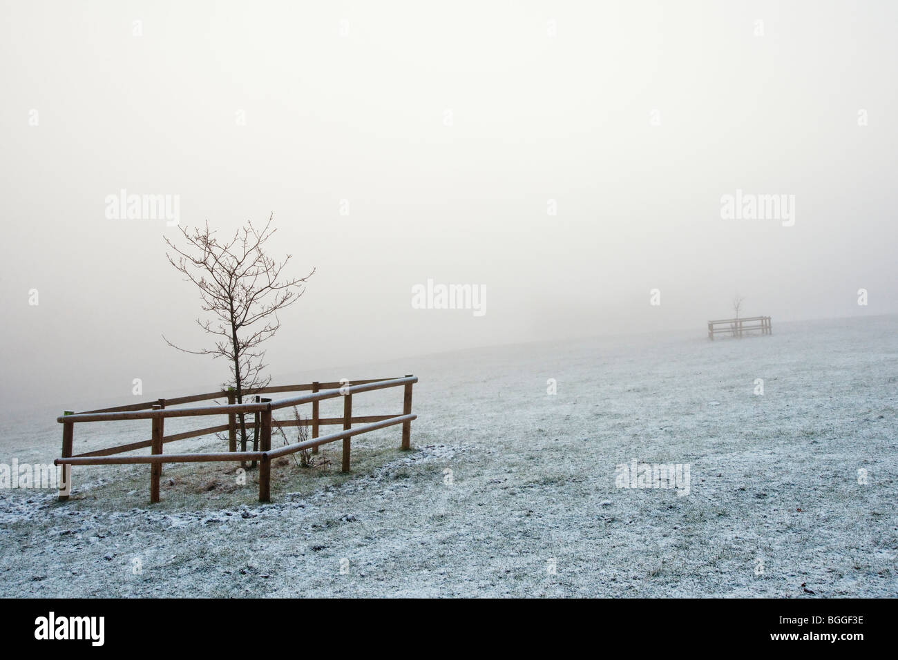 young sapling in winter mist - Stock Image