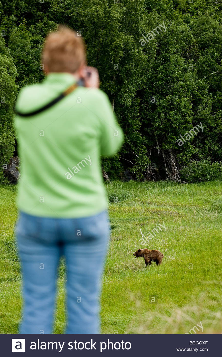 Alaska, Turnagain Arm. Tourist photographing a young grizzly bear by the Seward Highway near Anchorage. The mother - Stock Image