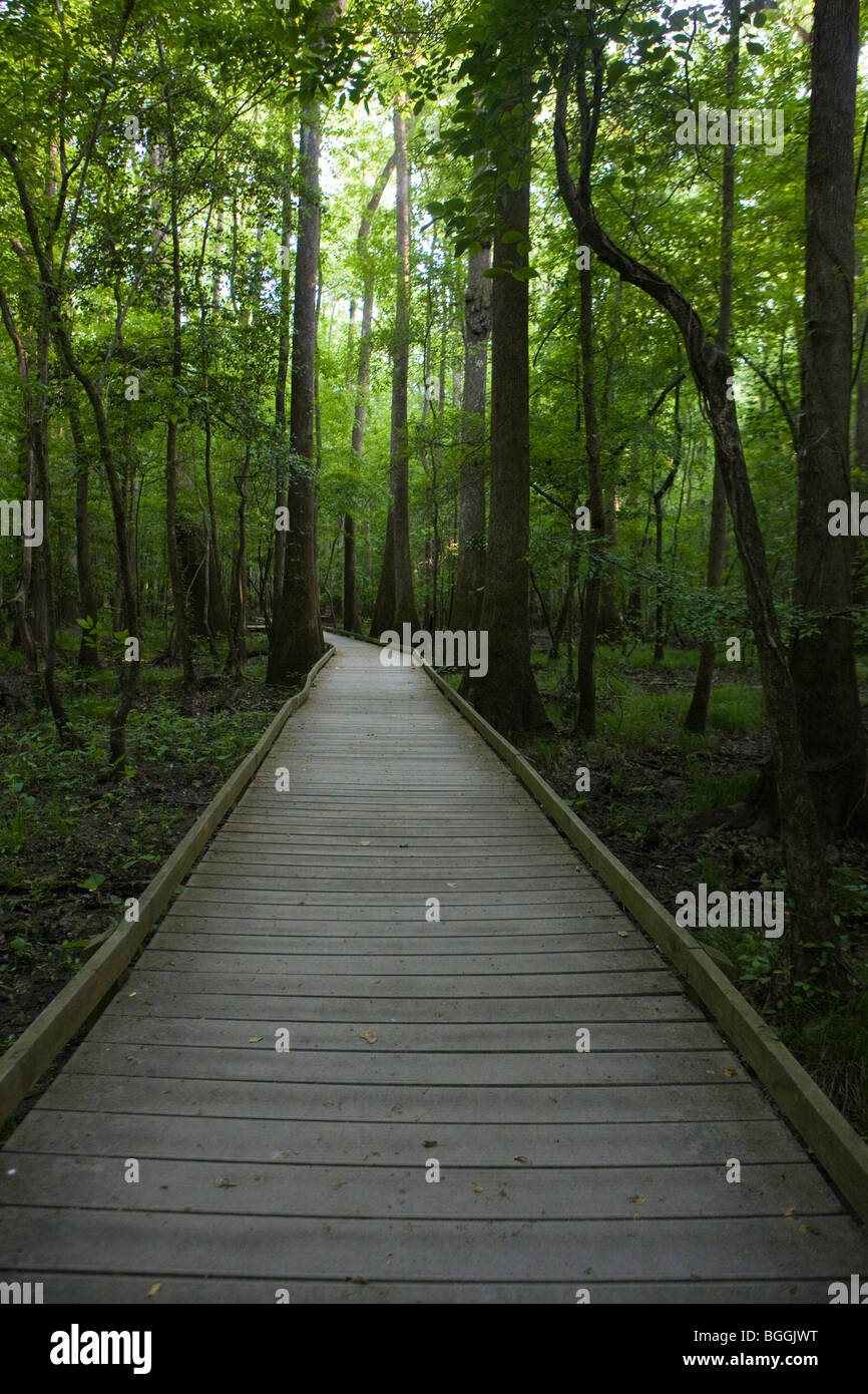 Boardwalk path through forest trees, Congaree National Park, near Columbia, South Carolina. - Stock Image