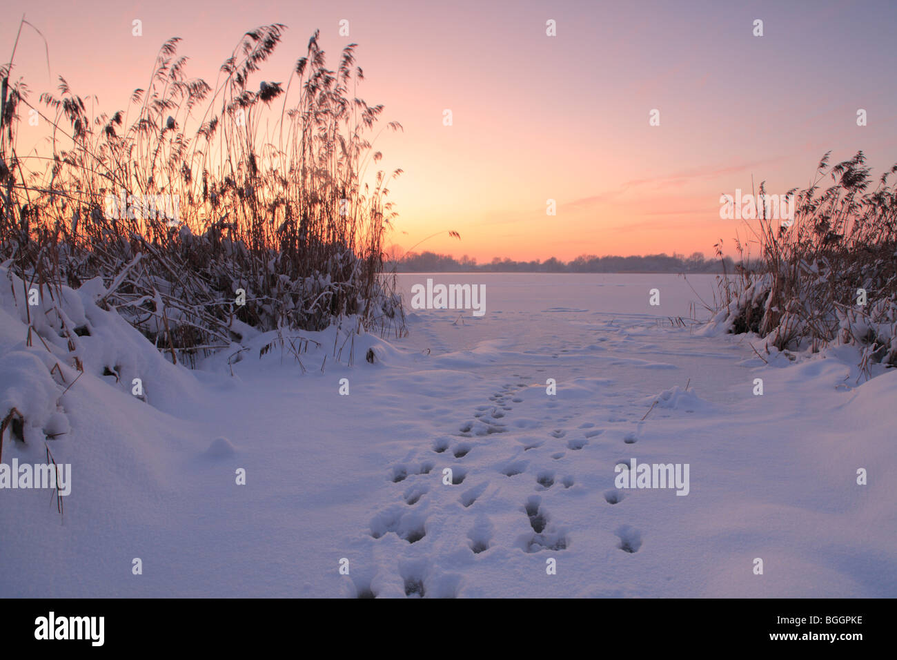 animal tracks in snow on frozen Posthorn lake (Posthornsee) in Halle (Germany) at dusk, Posthornsee in Halle (Saale) Stock Photo