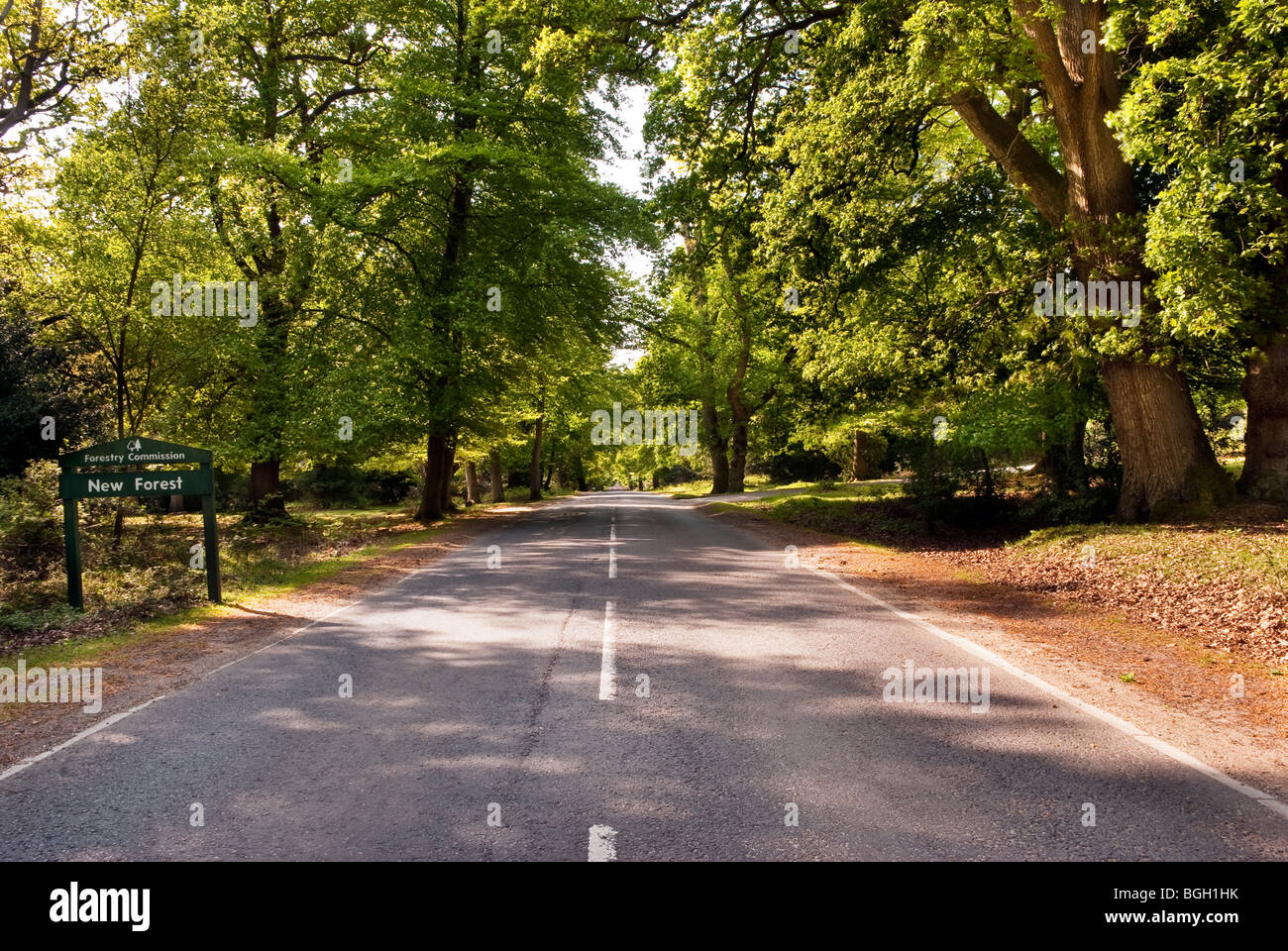 Entrance to the New Forest near Bramshaw Hampshire - Stock Image