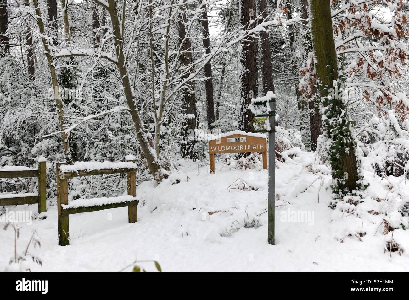 Wildmoor Heath in snow - 2 - Stock Image