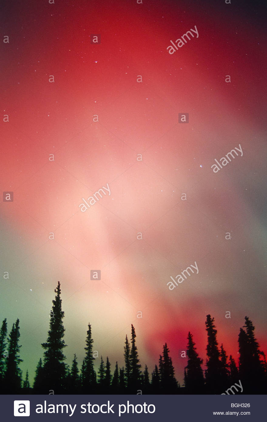 Aurora Borealis, Nov/03. Denali National Park, Alaska. - Stock Image