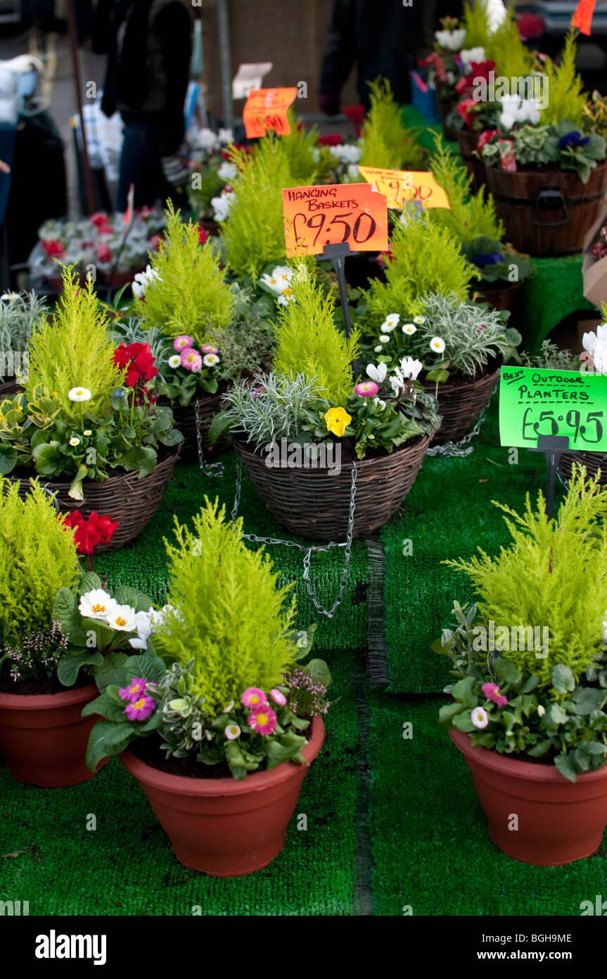 decorative decor index pots
