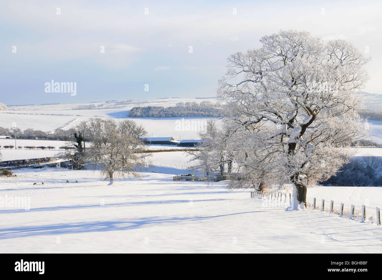 snow covered trees in field Northumberland 08/01/2010 - Stock Image