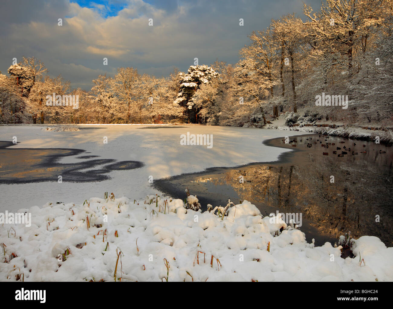 Keston Ponds winter scene. - Stock Image