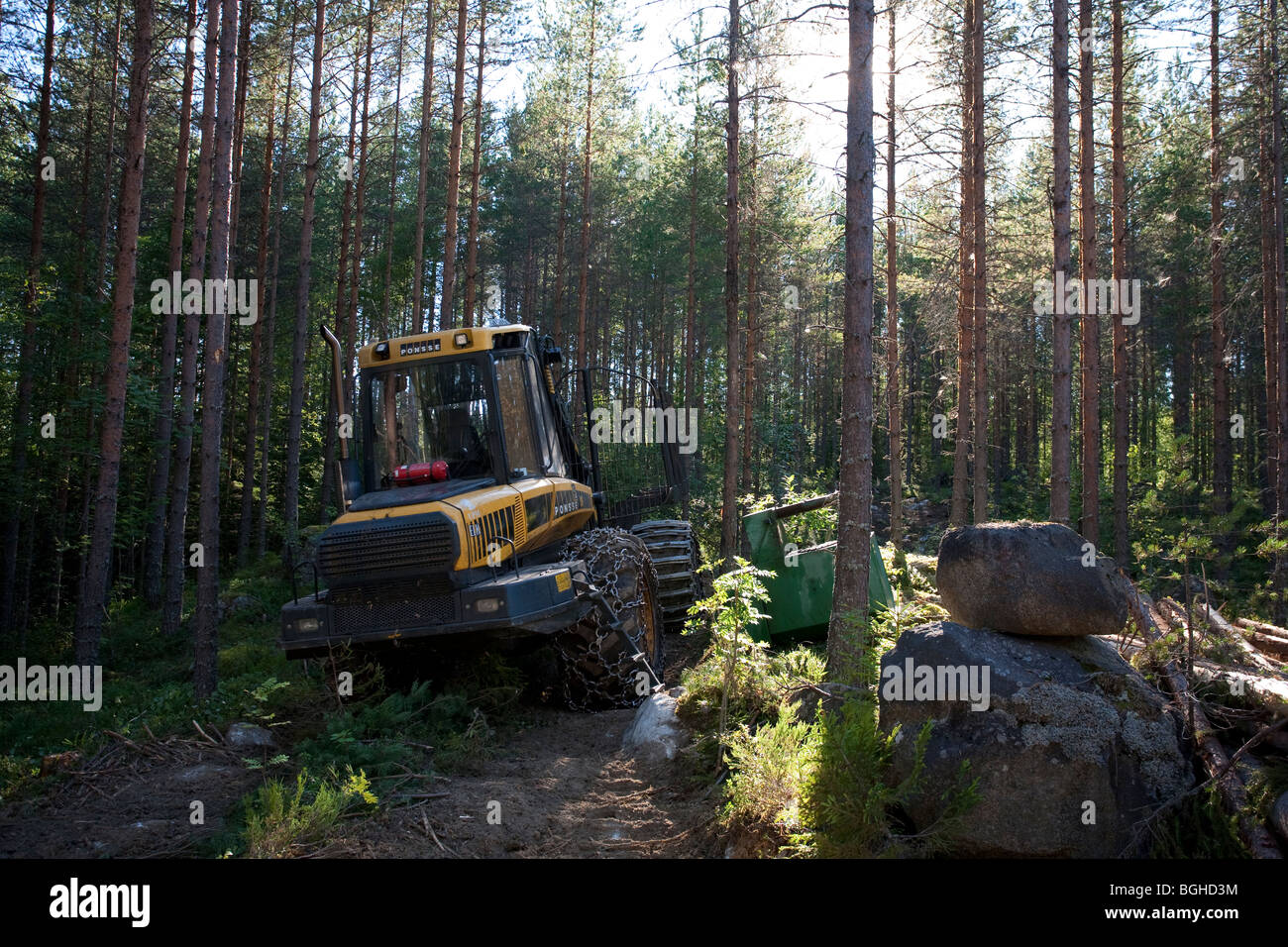 Yellow Ponsse Elk forest harvester / forwarder in the young Finnish pine ( pinus sylvestris ) forest , Finland - Stock Image