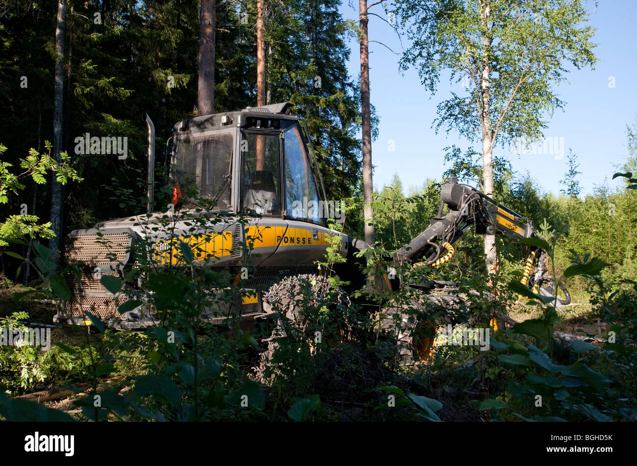 Yellow Ponsse Ergo forest harvester at felling site in Finnish forest , Finland - Stock Image