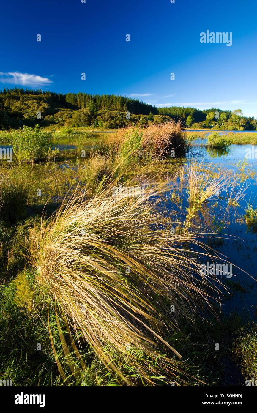 Lake Rotoma, North Island, New Zealand - Stock Image