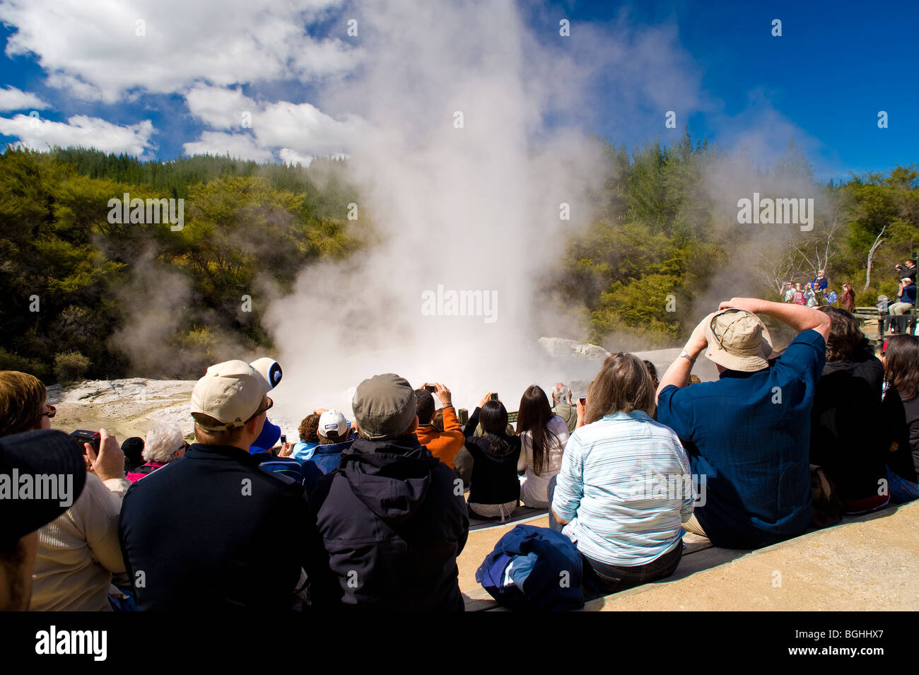 Lady Knox Geyser, Wai-O-Tapu Thermal Wonderland, North Island, New Zealand - Stock Image
