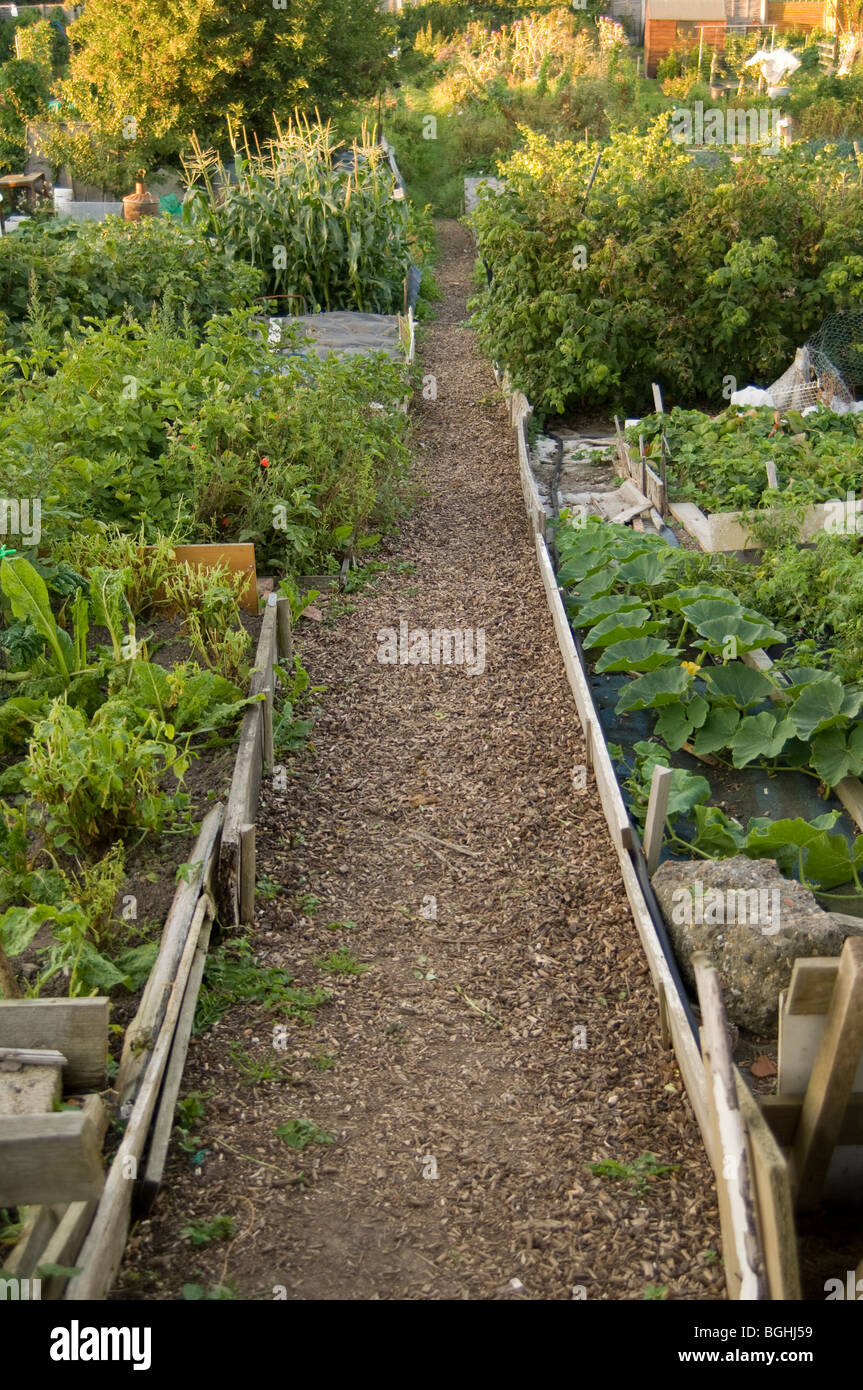 Path through allotment plots showing beds filled with various vegetables - Stock Image