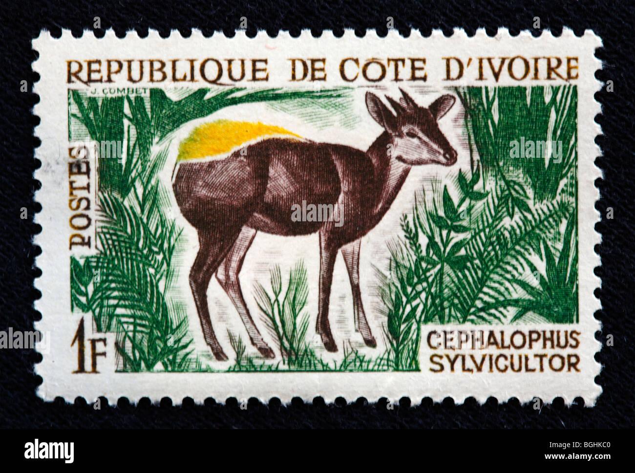 Cephlophus sylvicultor, postage stamp, Cote d'Ivoire, 1970s - Stock Image