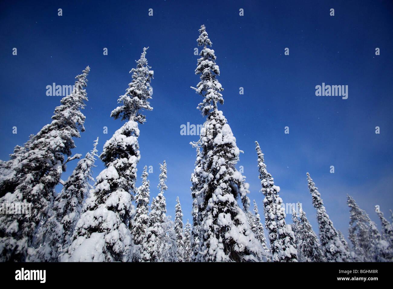 Spruce forest in Urho Kekkonen National Park, Finland - Stock Image
