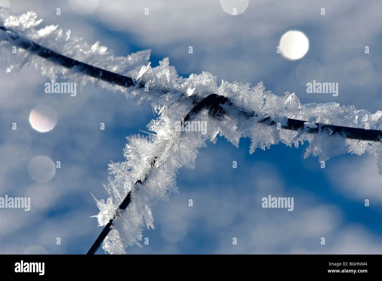 fence covered with snow crystal - Stock Image