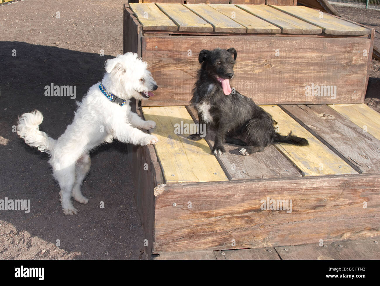 Dogs playing on a sunny day - Stock Image