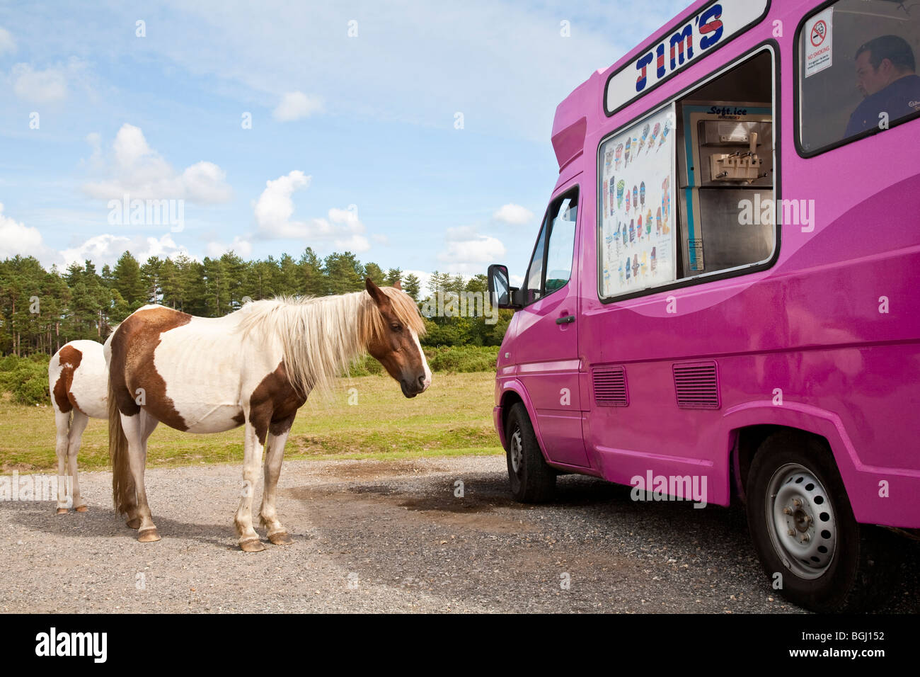 New Forest ponies looking at ice cream van at parking area between Fritham and Stoney Cross, New Forest, Hampshire - Stock Image