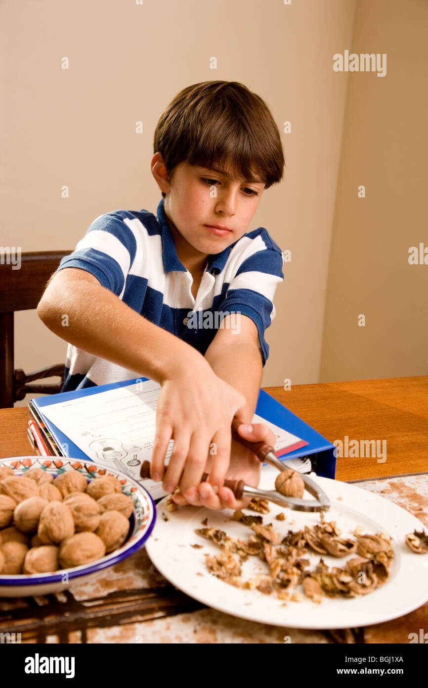 4th grade white boy cracking walnuts while doing his homework at the kitchen table. - Stock Image