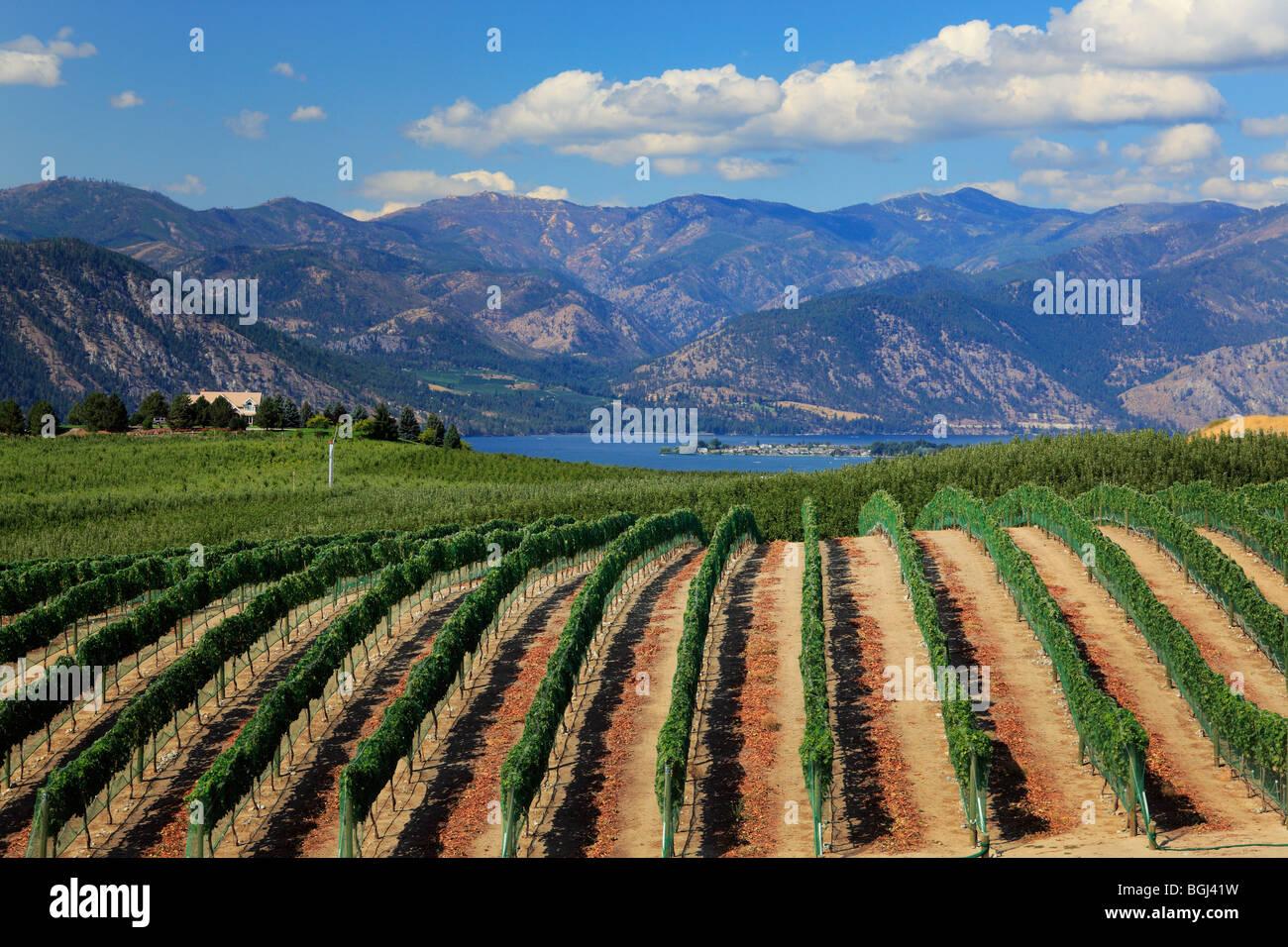 Vineyard on Lake Chelan in eastern Washington state Stock Photo