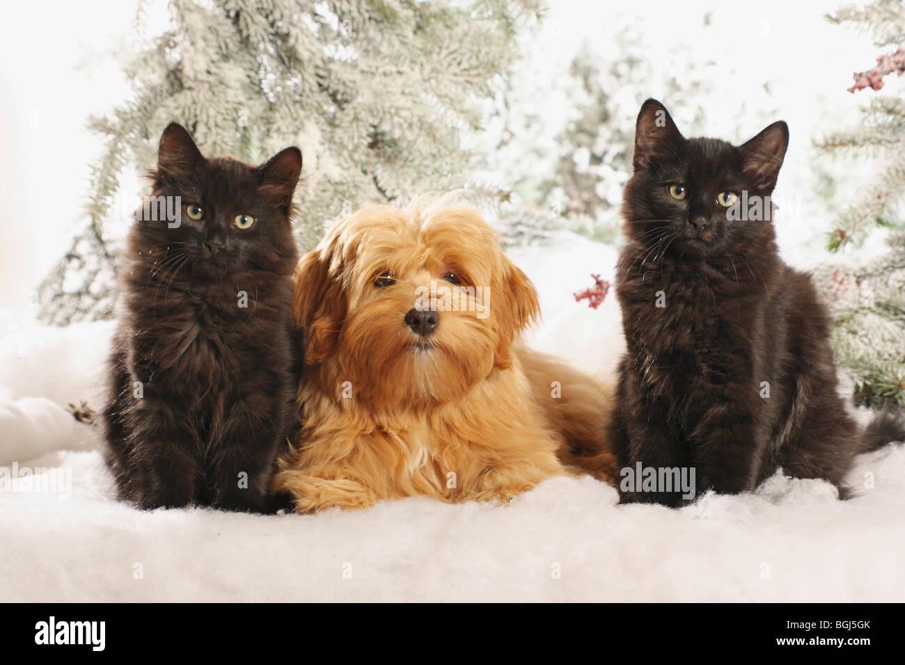 Between Dog And Cat Stock Photos & Between Dog And Cat ...