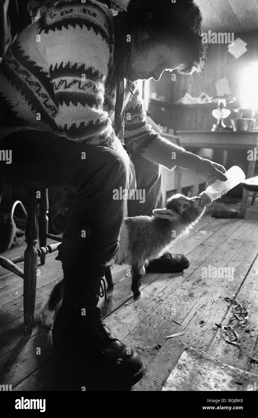 Man feeding a baby goat at alternative lifestyle commune in Skogsnäs, Northern Sweden - Stock Image