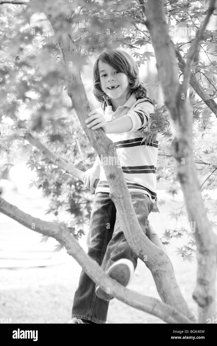 boy sitting in tree - Stock Image