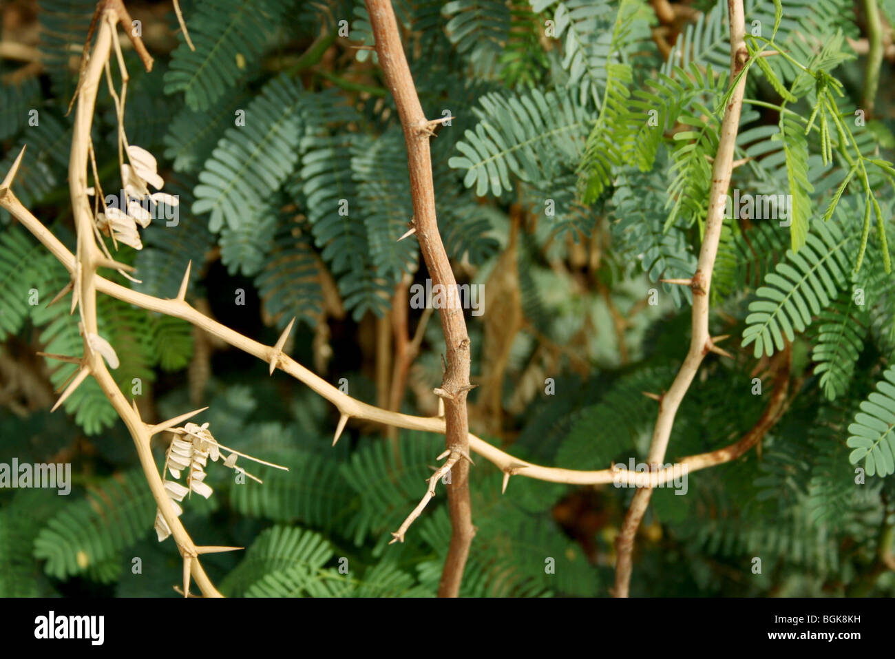 Meshed in problems - Stock Image
