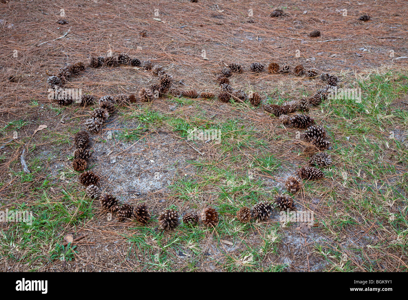 Shape of Mickey Mouse outlined in pine cones on the ground in Walt Disney World's Fort Wilderness Resort and - Stock Image