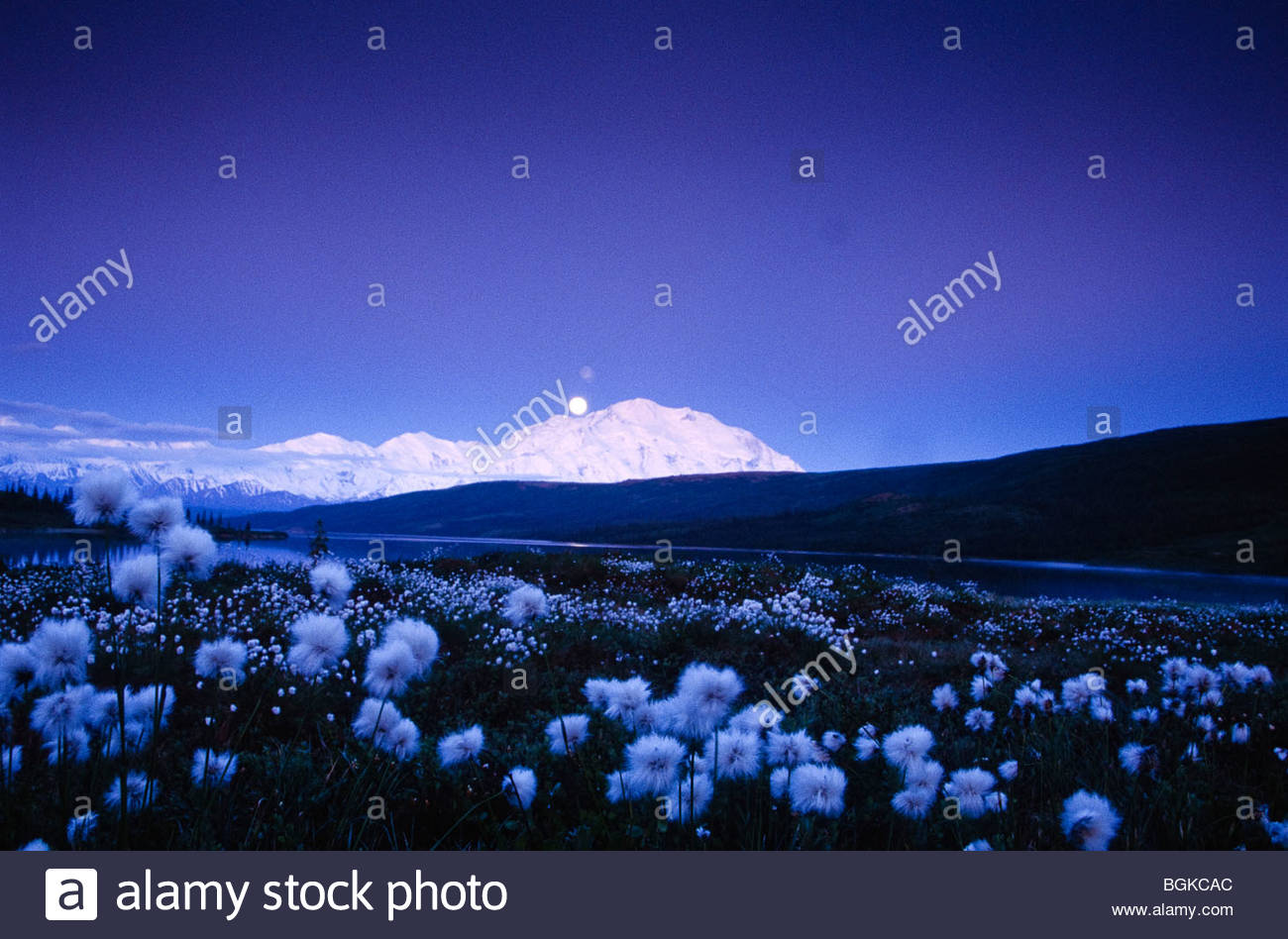 Alaska, Denali National Park, Wonder Lake. Moonrise above snow-capped Mt. McKinley. - Stock Image