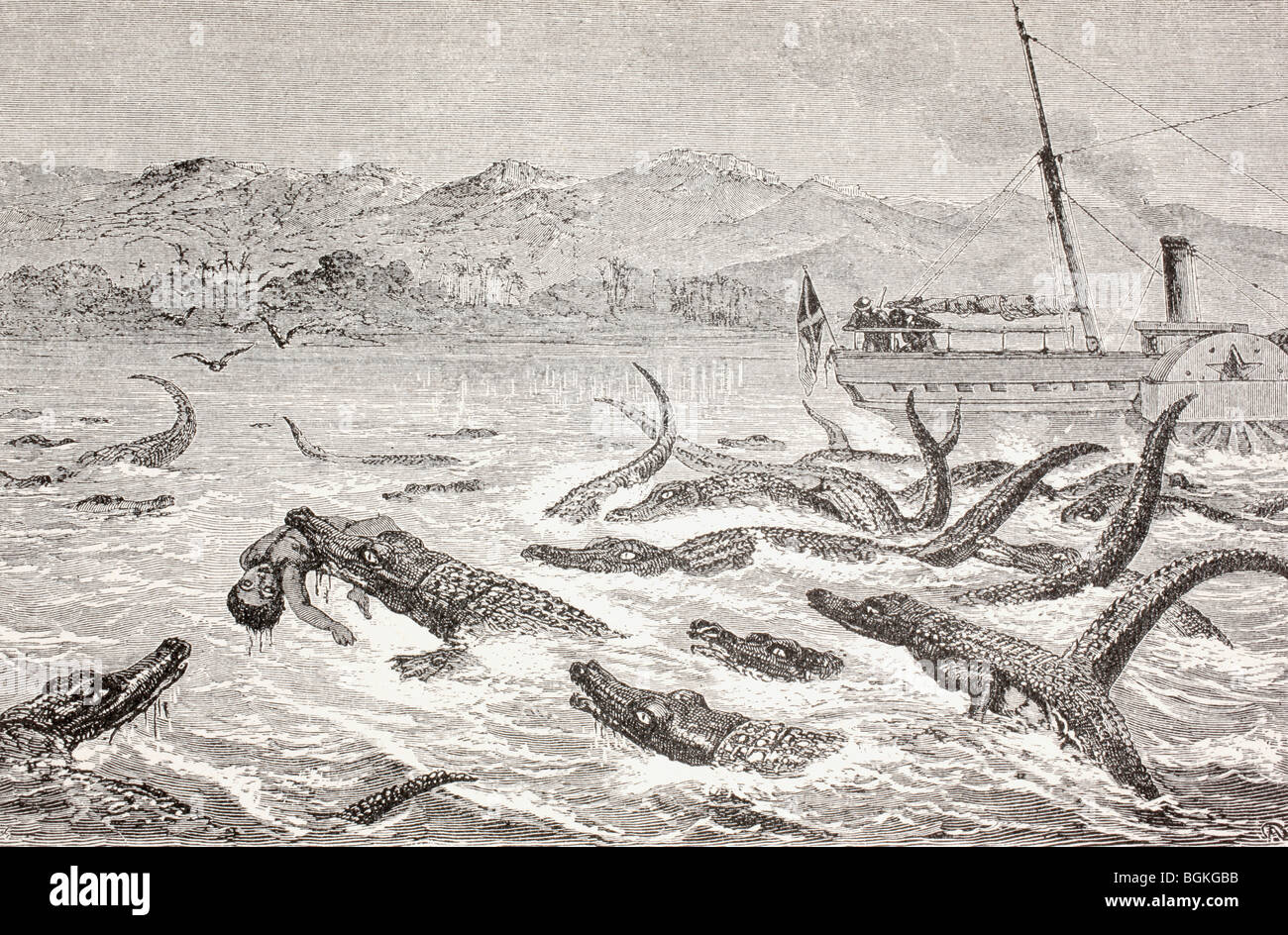 Crocodiles take a man in the Nile River in the late 19th century. - Stock Image