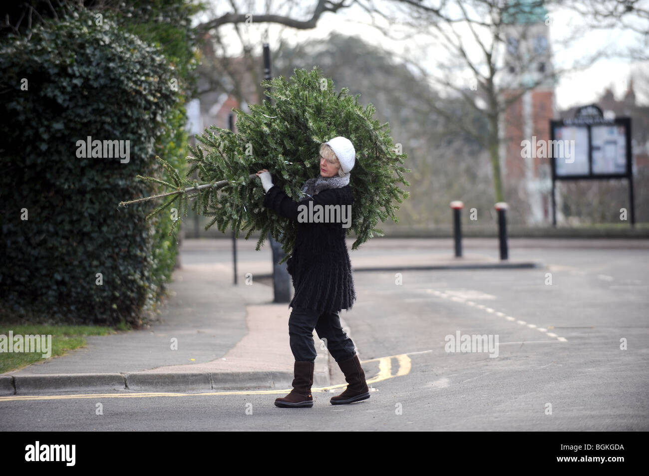 Woman Carrying Christmas Tree On Her Shoulders Down The