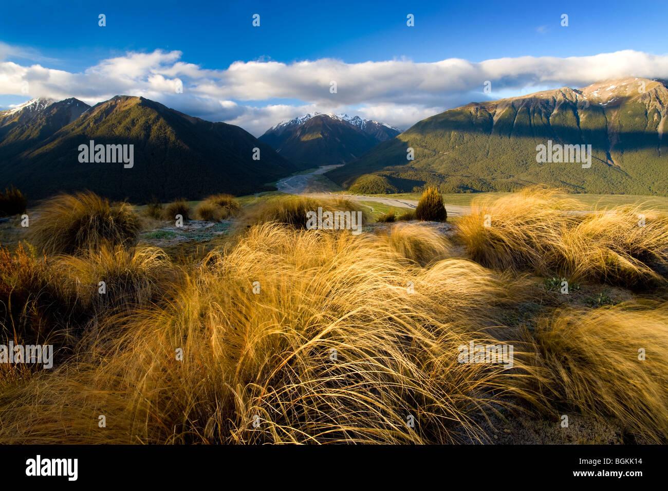 Arthur's Pass National Park, South Island, New Zealand - Stock Image