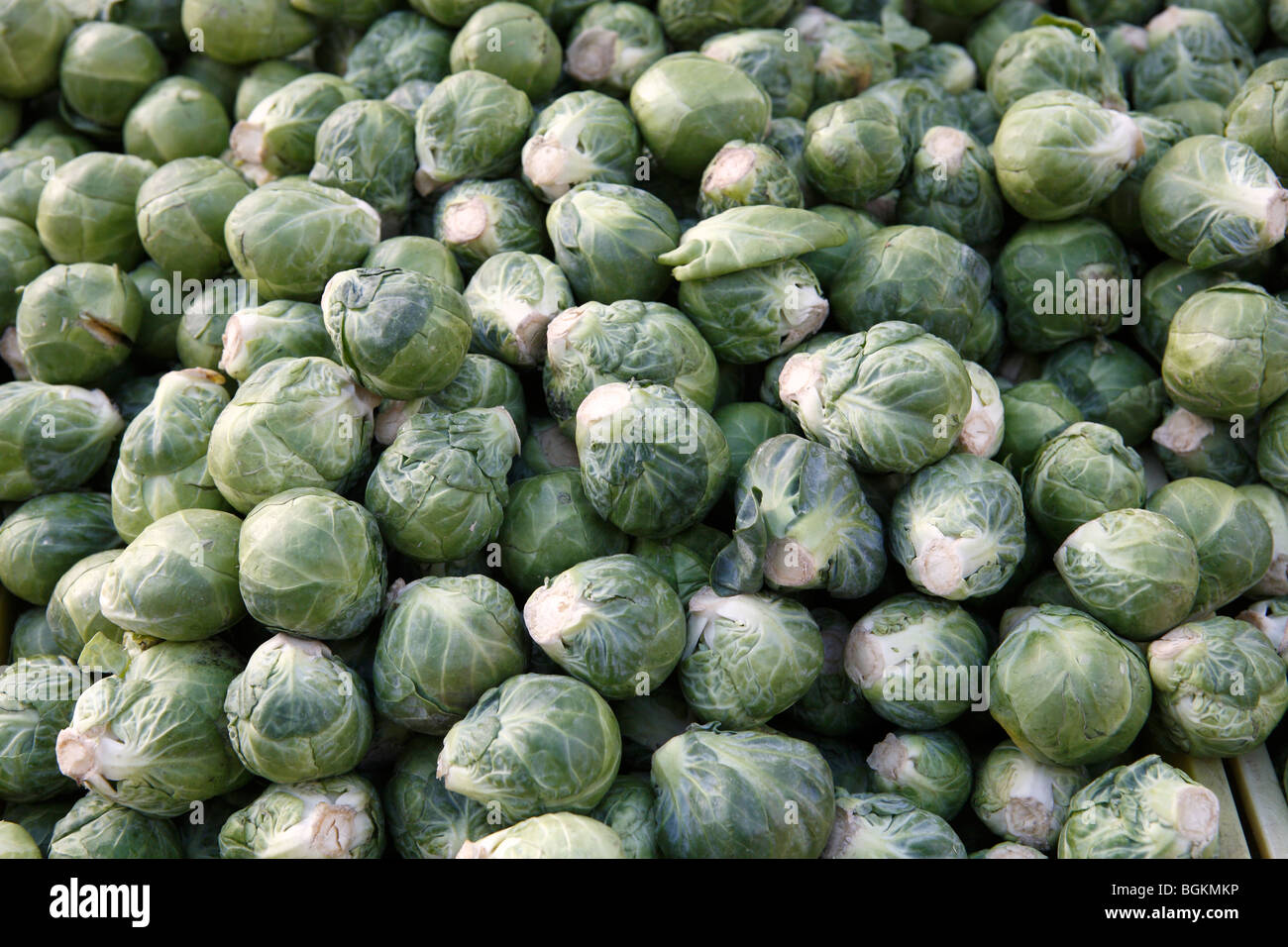 Brussels sprouts for sale - Stock Image