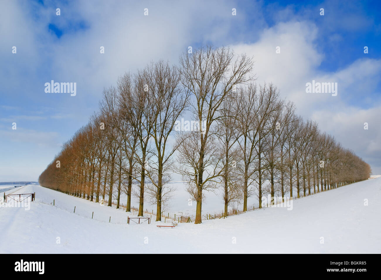 Composition with trees in the Johannes Kerkhovenpolder near Woldendorp, province Groningen, Netherlands - Stock Image