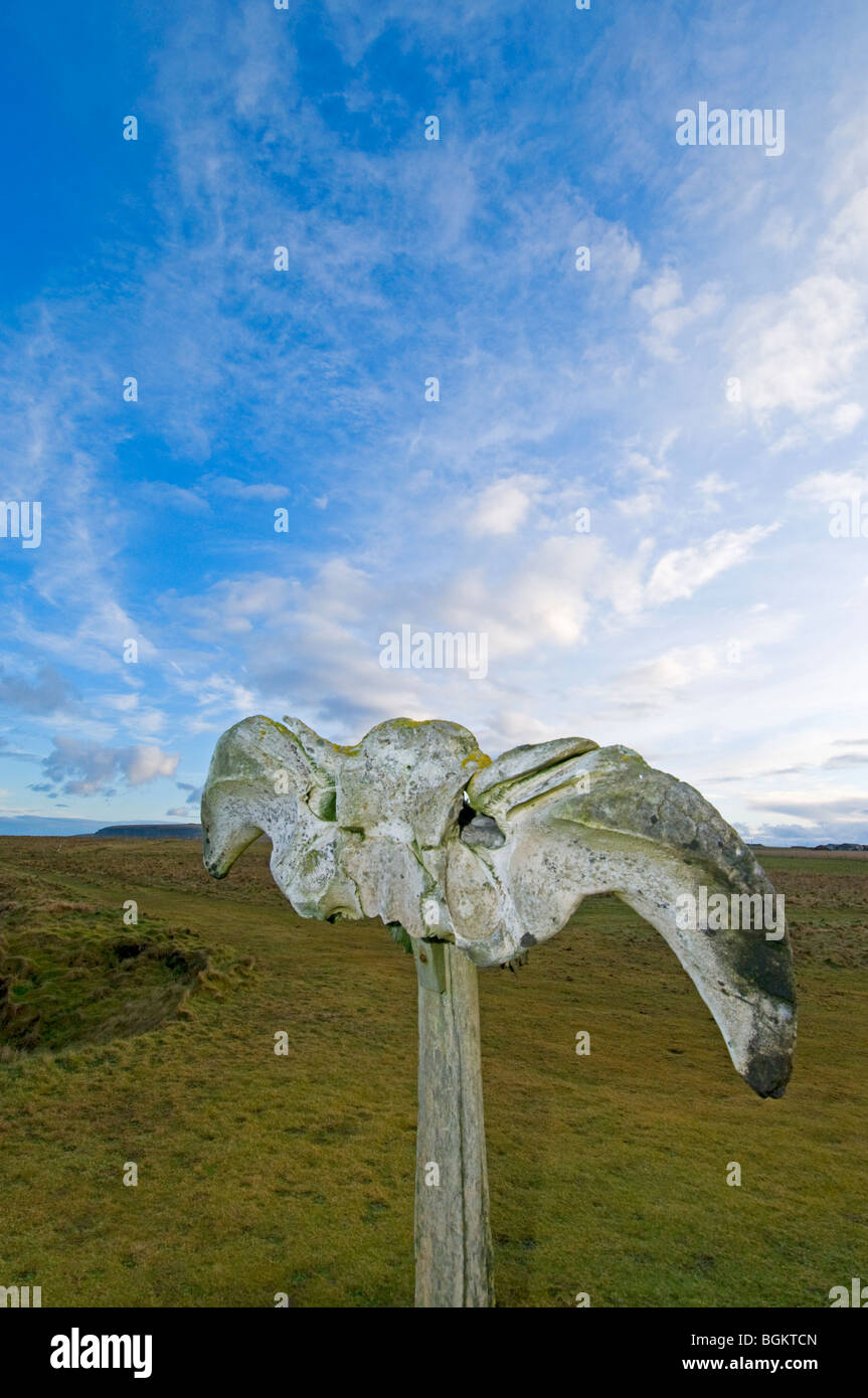 The Birsay whalebone erected on the coastal path from the remains of a beached whale c. 1876.  SCO 5869 - Stock Image